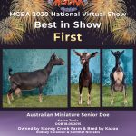 Best in Show MGBA Virtual Show 2020