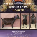 Best in Show Forth Place MGBA Virtual Show 2020