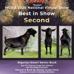 Best in Show Second Place MGBA Virtual Show 2020