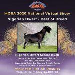 Best in Breed Nigerian Dwarf MGBA Virtual Show 2020