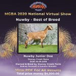 Best in Breed Nuwby MGBA Virtual Show 2020