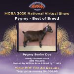 Best in Breed Pygmy MGBA Virtual Show 2020