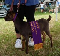 Khufu Best of Breed ND